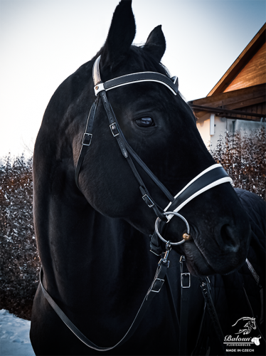 Baloun® bridle made of black leather with bright padding